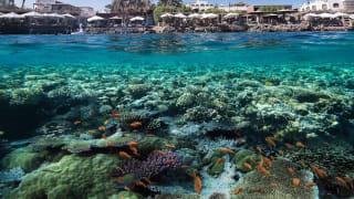 Unterwasserwelt im Roten Meer, Dahab, Ägypten
