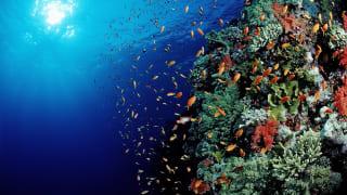 Korallenriff, Safaga, Ägypten