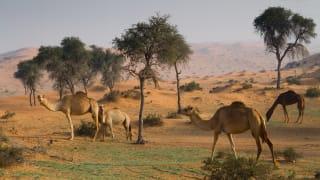 Al Wadi Wüste, Ras al-Khaimah, VAE