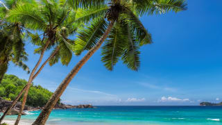 Coco Palm Beach, Jamaika