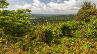 Blick auf Saint Ann's Bay, Jamaika