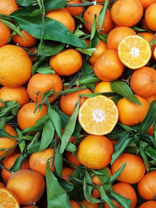 Orangen © Balint Radu/Adobe Stock