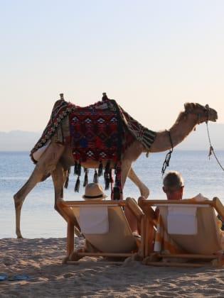 Kamele, Sonne und Strand © Robinson Club