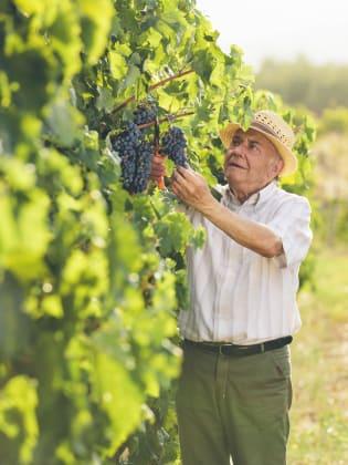 Landwirt in seinen Weinreben, Griechenland
