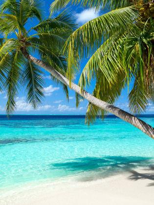 Palmenstrand, Malediven