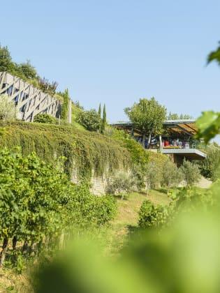 Weingut Kozlovic bei Buje in Istrien © Joachim Negwer
