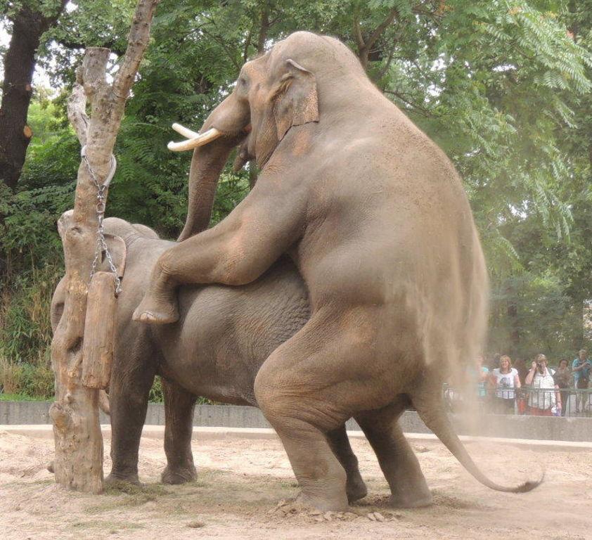 Elephant porn pics #10
