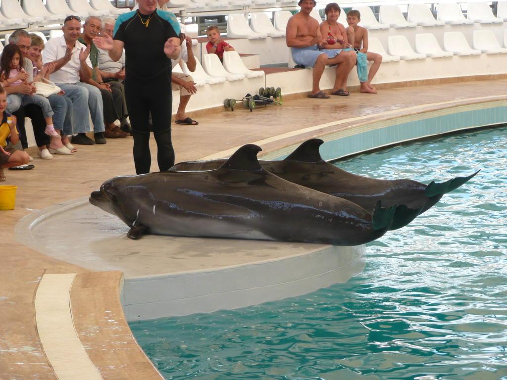 Freizeitpark Bilder Freizeitpark Delfinarium Kemer