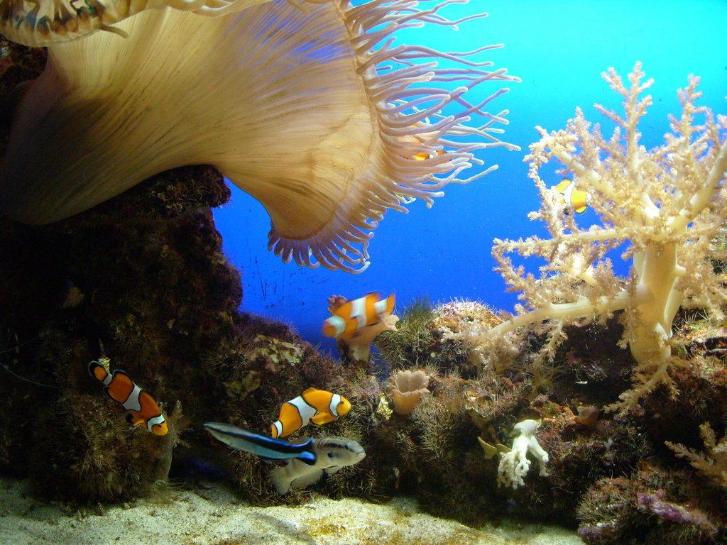 Bild Quot Im Aquarium Quot Zu Loro Parque In Puerto De La Cruz