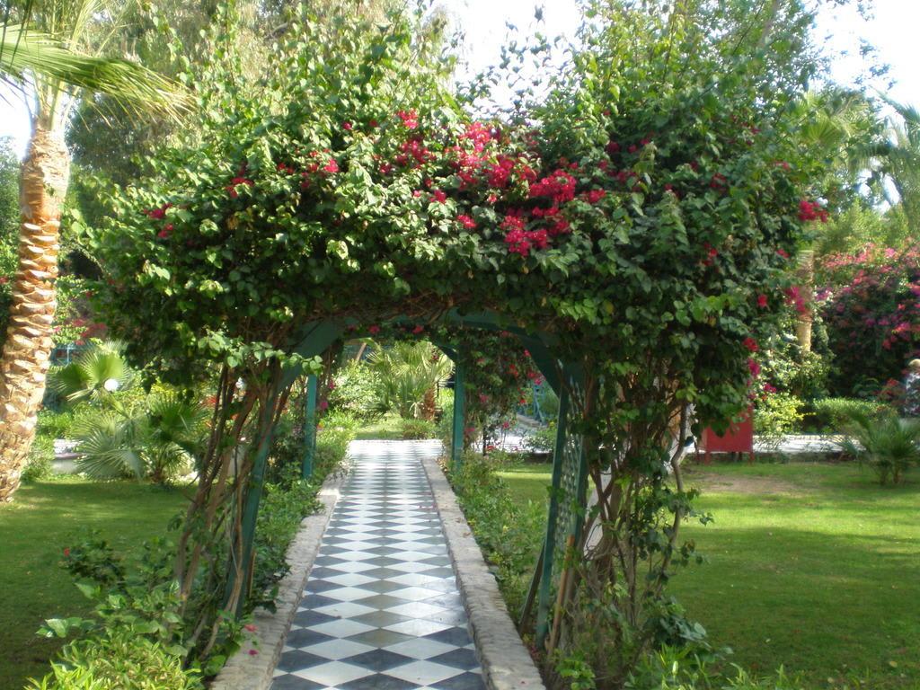 bild romantischer weg im garten zu giftun azur resort in hurghada. Black Bedroom Furniture Sets. Home Design Ideas