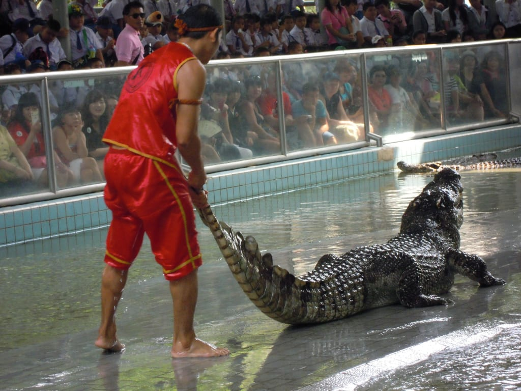 Crocodile Show Bilder Naturreservat/Zoo The Million Years Stone Park & Crocodile Farm