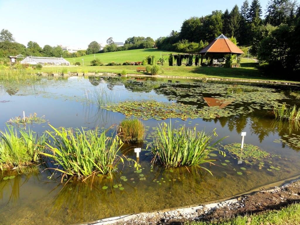 Bild Teich Mit Pflanzen Zu Experimenteller Botanischer Garten