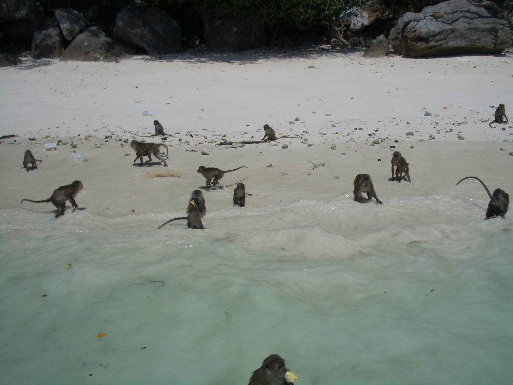 Affeninsel