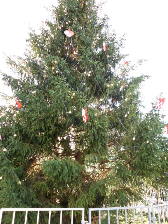 Bild Tannenbaum.Bild Tannenbaum Zu Weihnachtsmarkt Kopenhagen In Kopenhagen