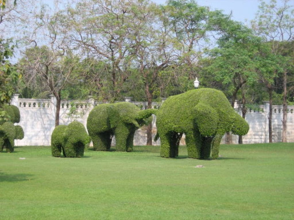 bild bang pa in elefanten aus buchsbaum zu bang pa in sommerpalast in bang pa in. Black Bedroom Furniture Sets. Home Design Ideas