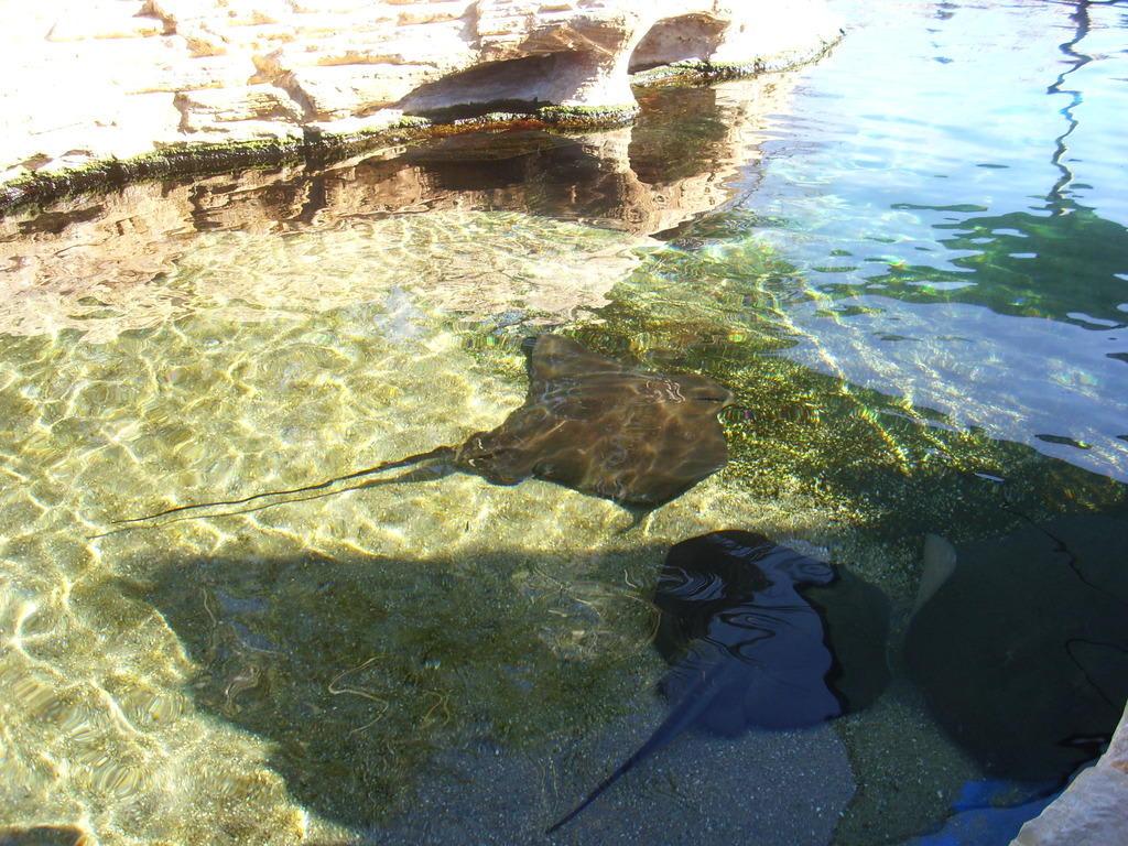 Bild rochen im gartenteich zu palma aquarium in playa for Aquarium fische im gartenteich