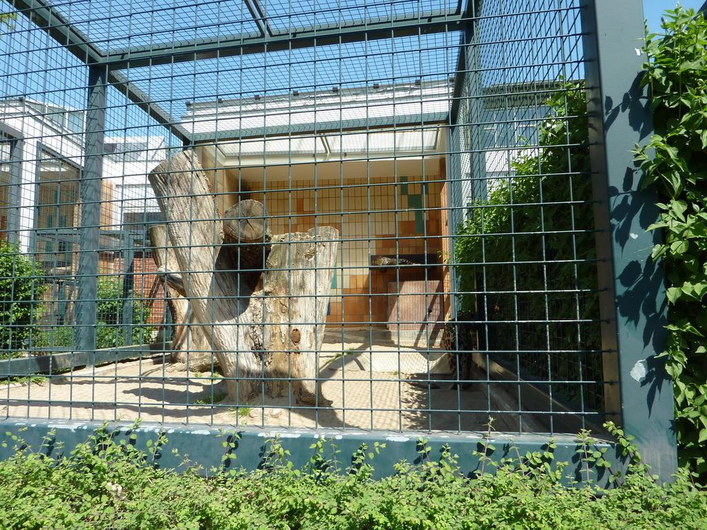 bild china leopard gehege zu tierpark friedrichsfelde in berlin lichtenberg. Black Bedroom Furniture Sets. Home Design Ideas