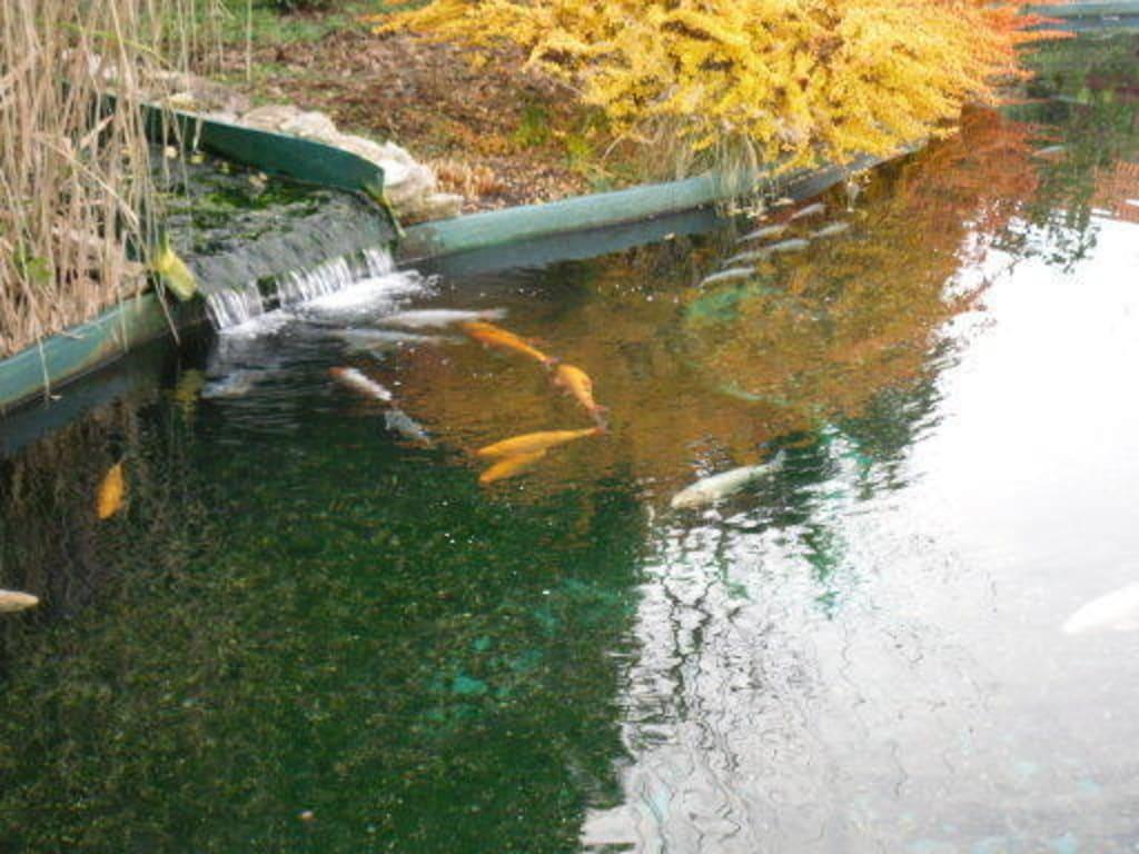 Bild koi karpfen au enbecken zu meeresaquarium in zella for Welche fische passen zu kois