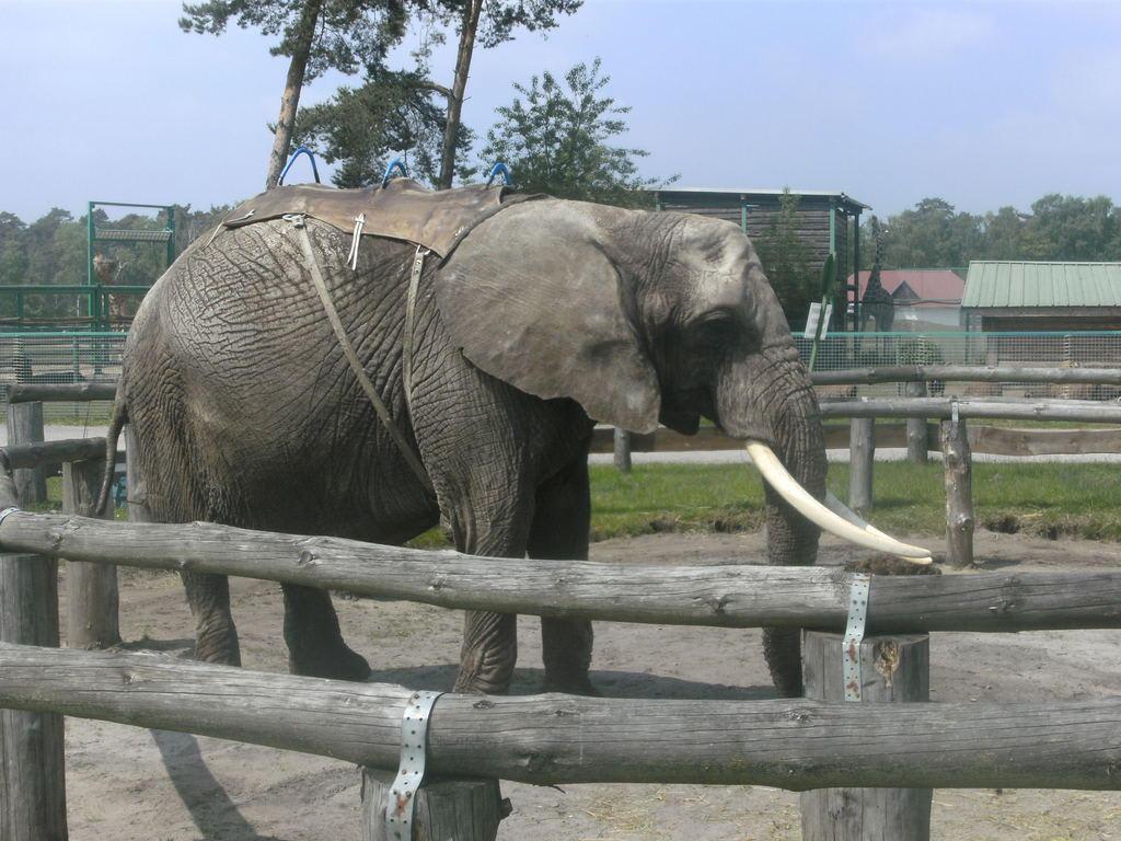 Elefanten Reiten Deutschland