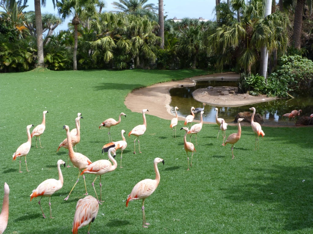 Bild flamingo zu loro parque in puerto de la cruz - Loro parque puerto de la cruz ...