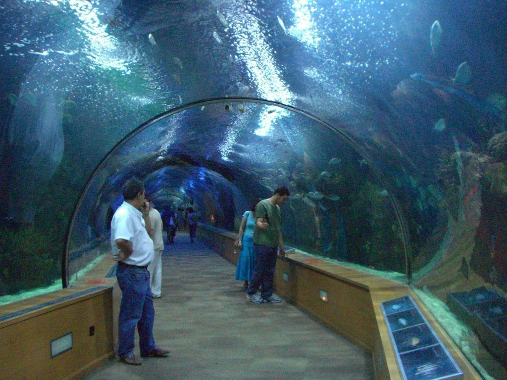 bild unterwassertunnel zu aquarium oceanongrafic in valencia. Black Bedroom Furniture Sets. Home Design Ideas