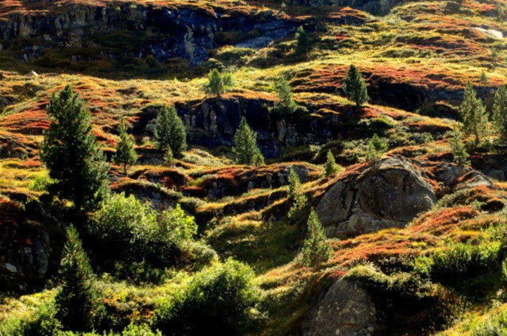 Teppich Langenfeld bild bunter teppich aus beerensträuchern zu wandern längenfeld in