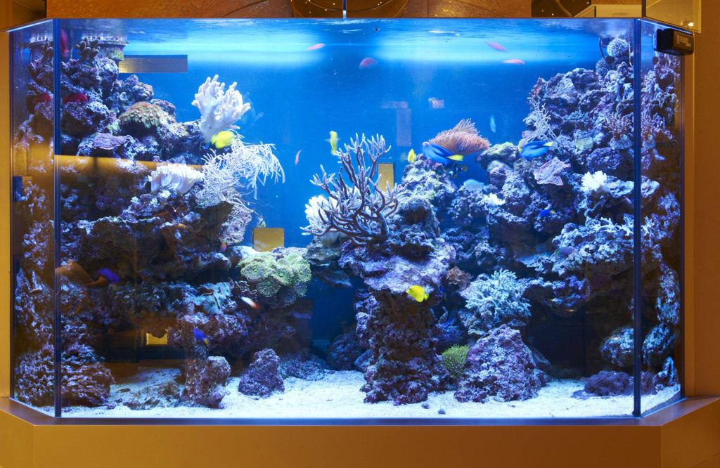 bild private spa salzwasser aquarium zu small luxury