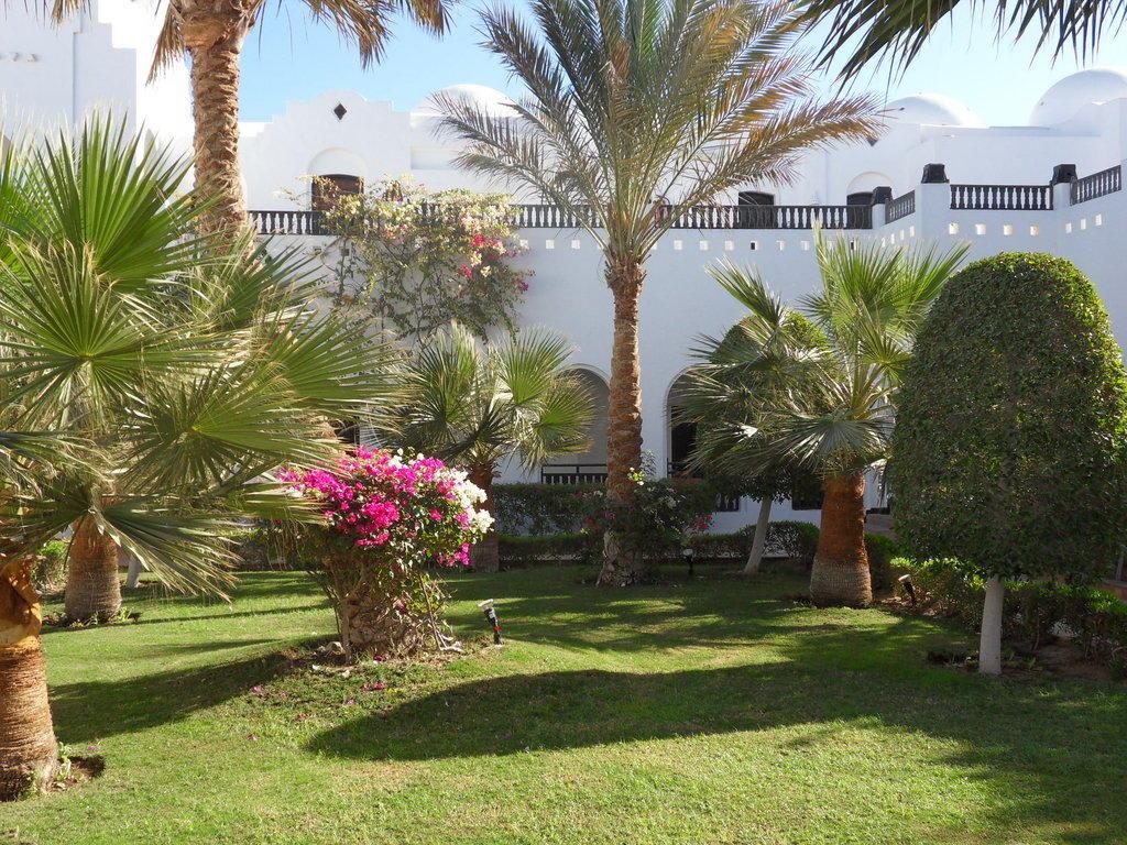 bild palmen blumen zu arabella azur resort in hurghada. Black Bedroom Furniture Sets. Home Design Ideas