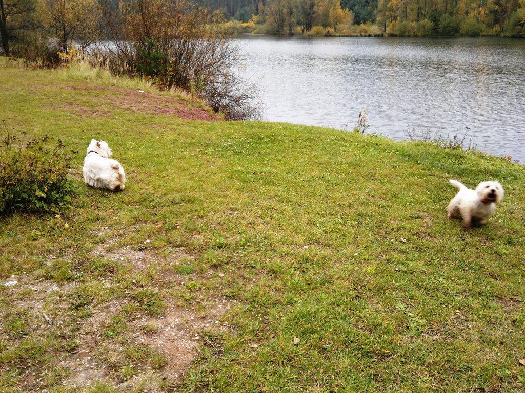Kahler See Hunde Erlaubt
