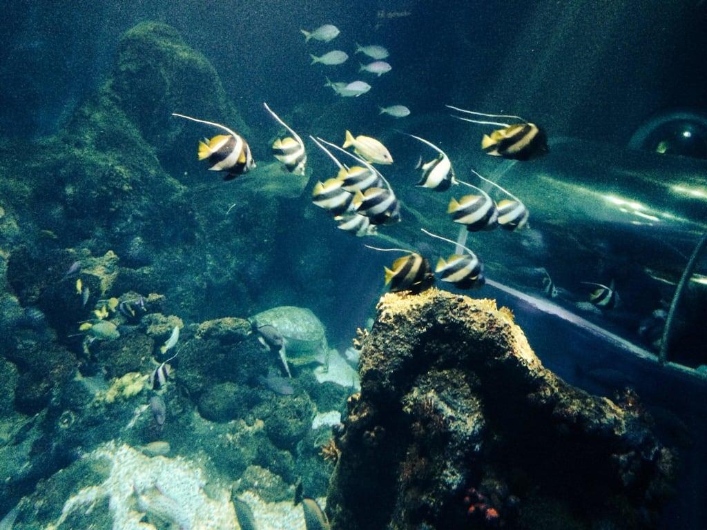 bild gr tes aquarium zu sea life konstanz in konstanz. Black Bedroom Furniture Sets. Home Design Ideas