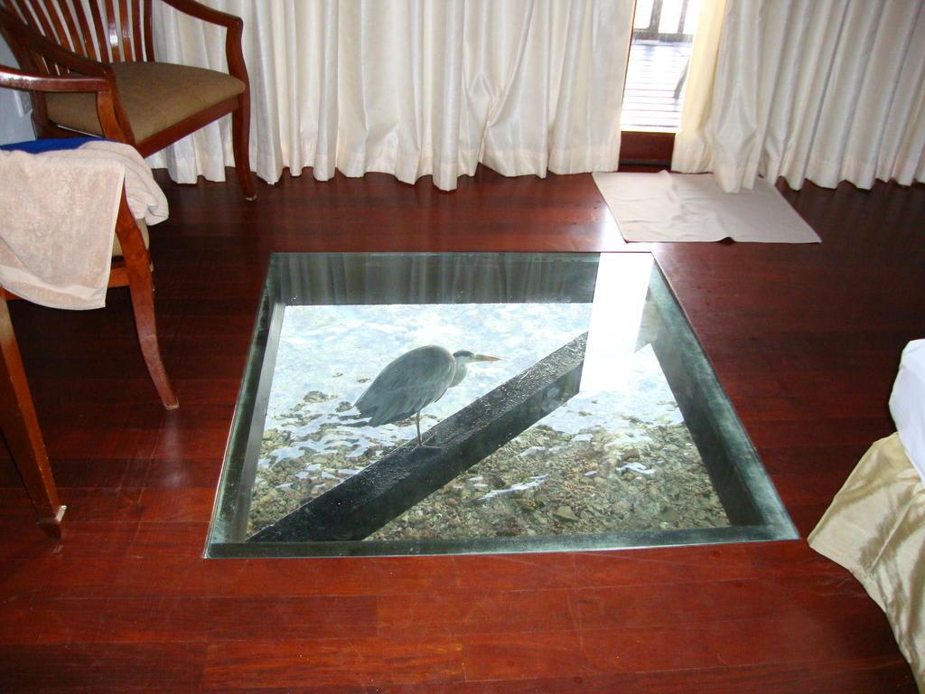 bild glasboden zu hotel embudu village in maafushi. Black Bedroom Furniture Sets. Home Design Ideas