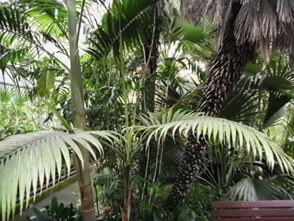 botanischer garten potsdam. Black Bedroom Furniture Sets. Home Design Ideas
