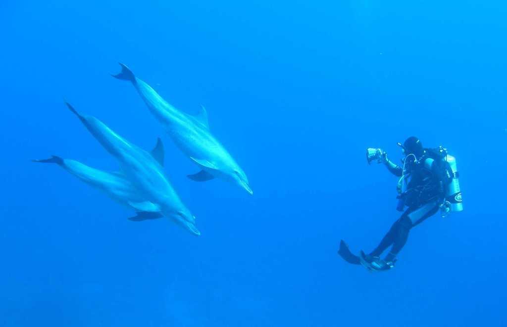 Bild Tauchen Mit Delfinen Zu Tauchen Marsa Alam In Marsa Alam