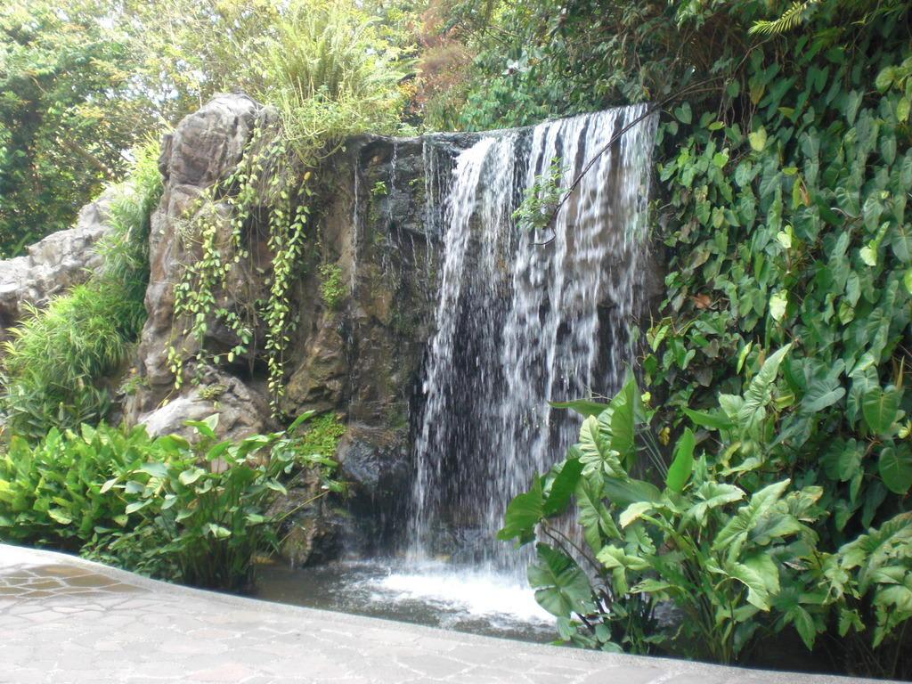 Bild Wasserfall Zu Botanischer Garten Singapur In Singapur