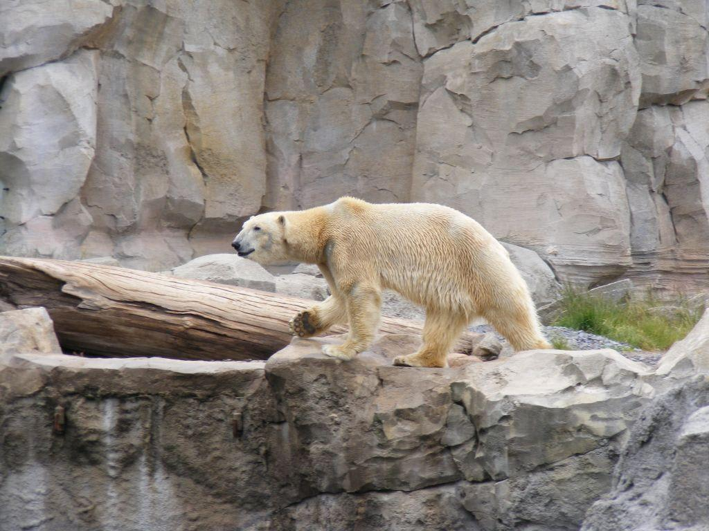Zoo Bremerhaven Г¶ffnungszeiten