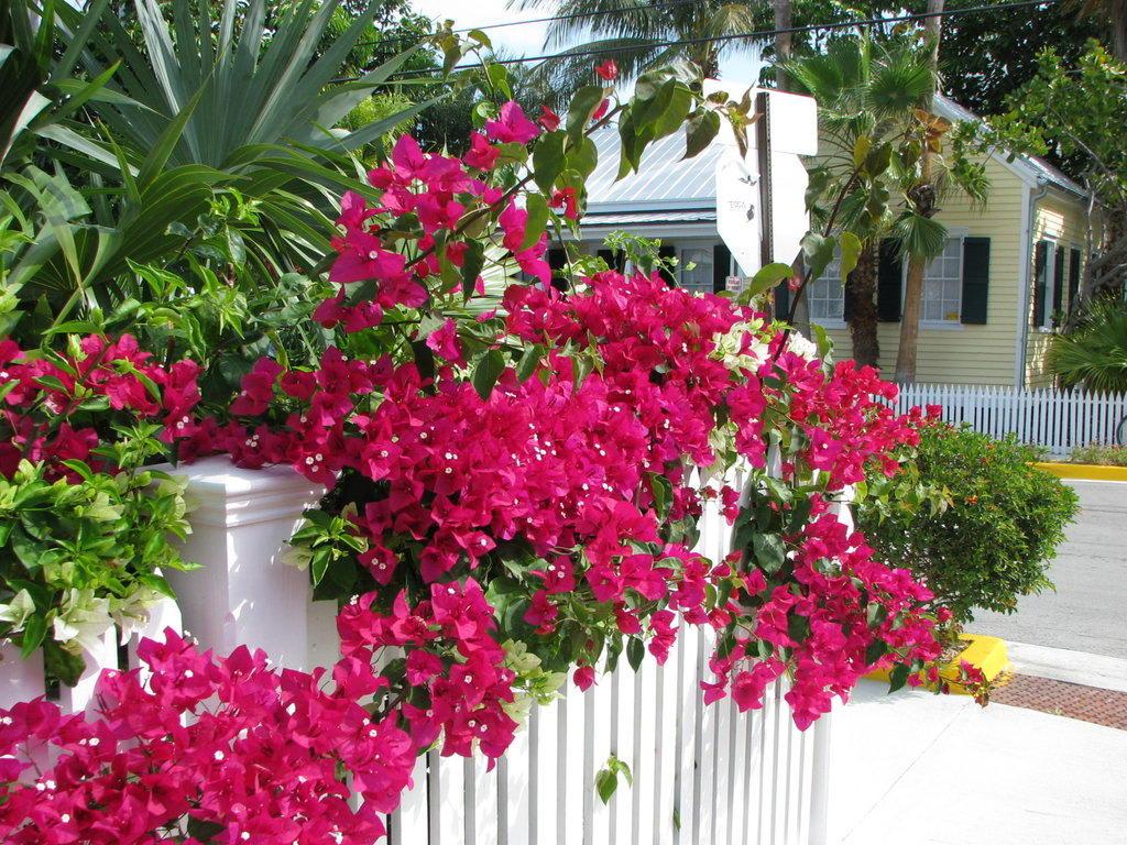 Bild Tolle Blumen Zu Conch Häuser In Key West