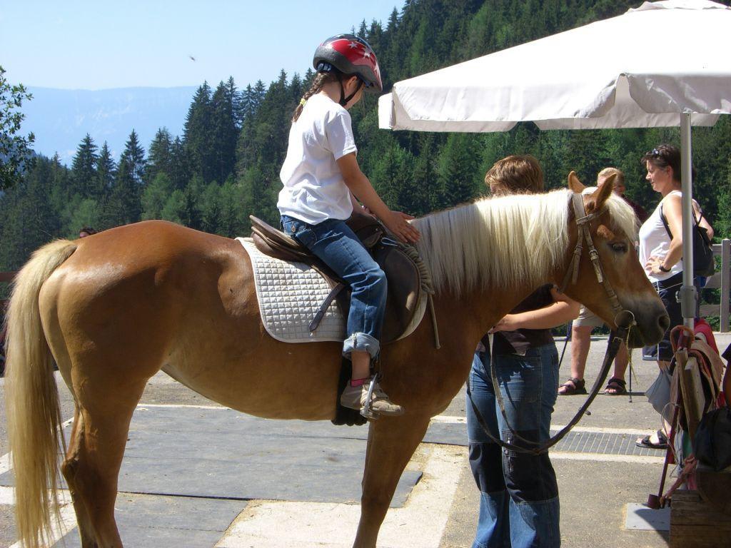 sex beim reiten auf pferden.