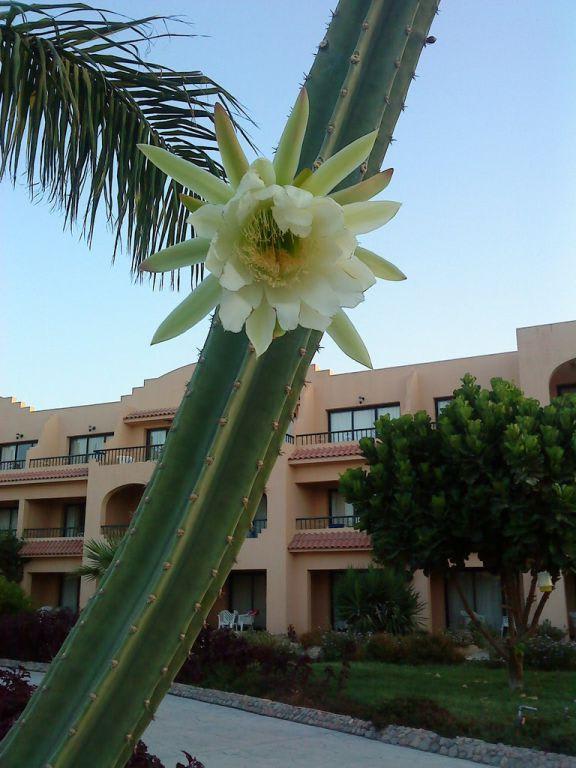 bild sch ne pflanzen sehr gepflegt zu hotel ali baba palace in hurghada. Black Bedroom Furniture Sets. Home Design Ideas