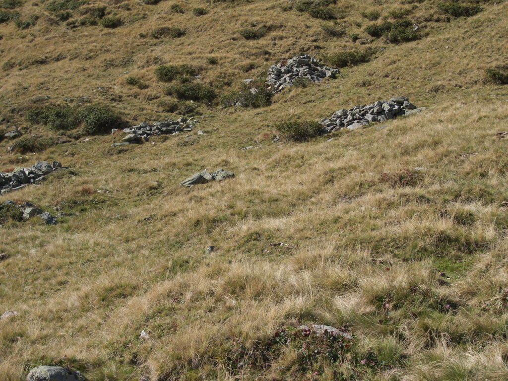 Seltene tiere bilder sonstiges landschaftmotiv meransen maranza