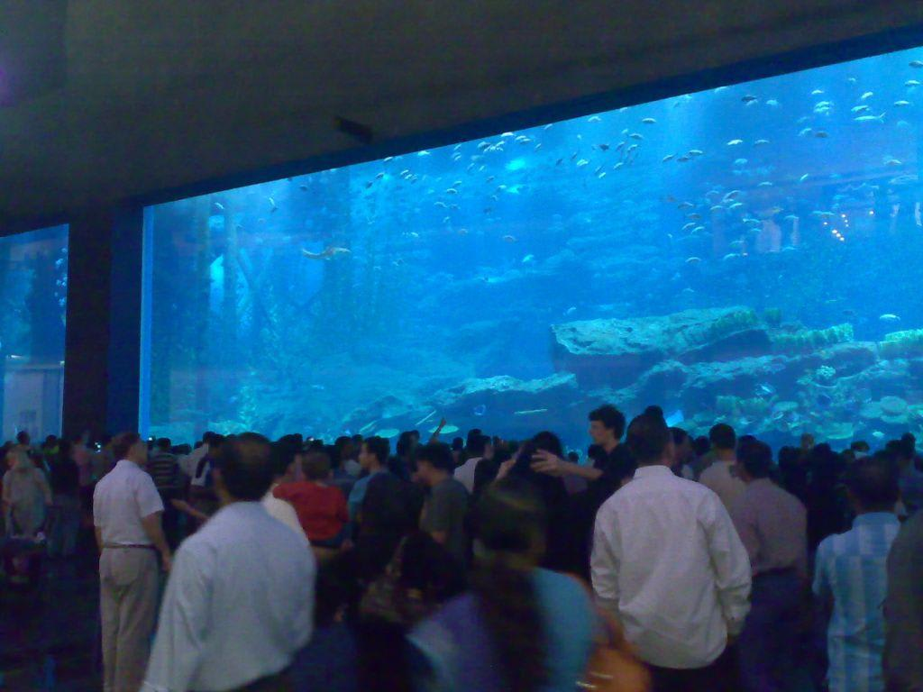 Bild  u0026quot;Dubai Mall Aquarium u0026quot; zu Dubai Mall in Dubai
