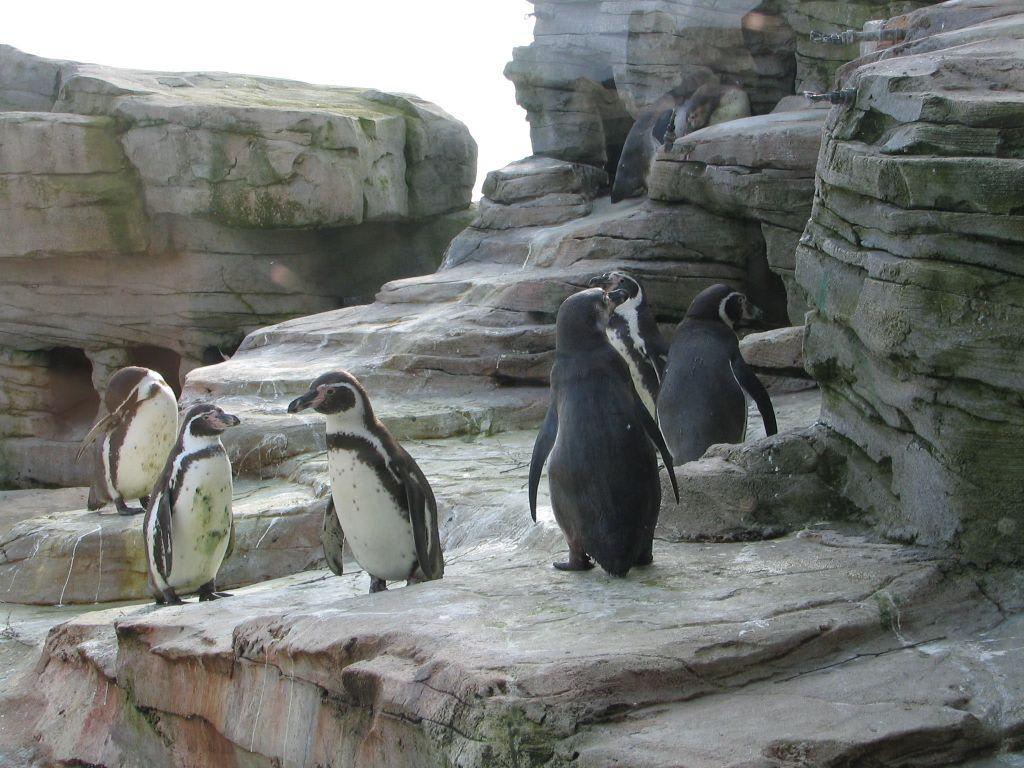 Zoo am meer bremerhaven sonstiges diginights - Garten und landschaftsbau bremerhaven ...