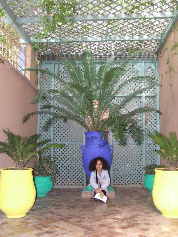 bild gr ne pflanzen farbige t pfe zu garten majorelle in marrakesch. Black Bedroom Furniture Sets. Home Design Ideas