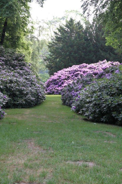 Die Hortensien im Garten Bilder Sonstiges Landschaftmotiv Schloss ...