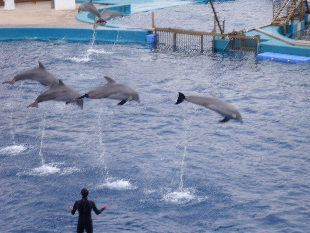 bild delfin show zu aquarium oceanongrafic in valencia. Black Bedroom Furniture Sets. Home Design Ideas