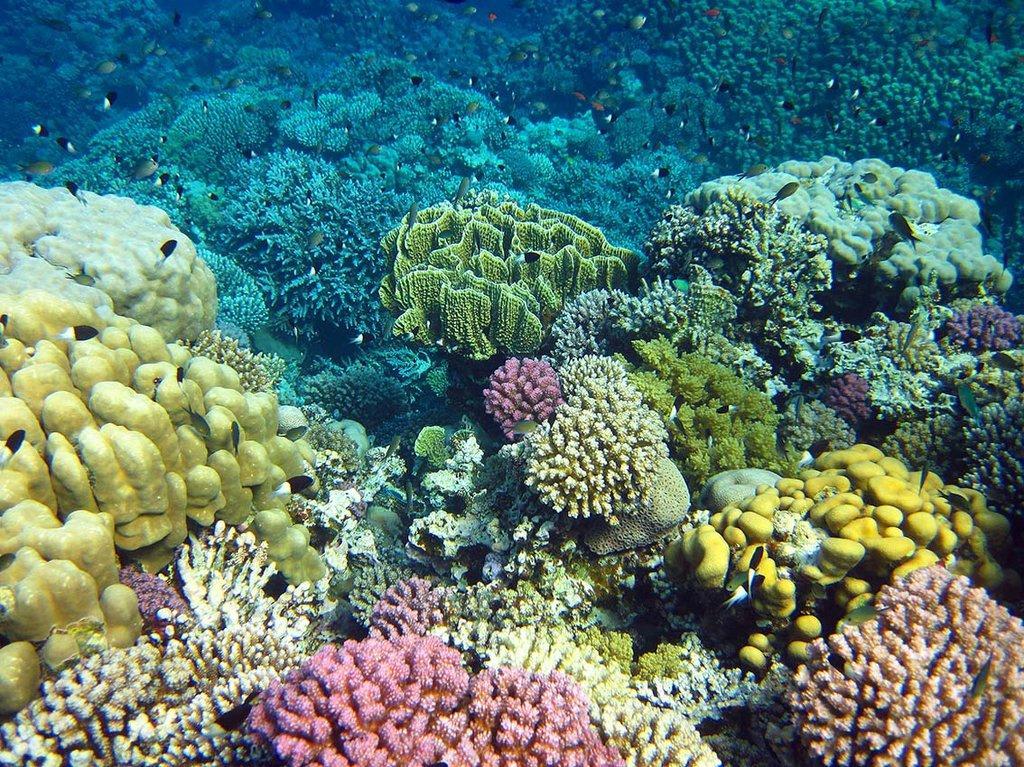 ökosystem Korallenriff