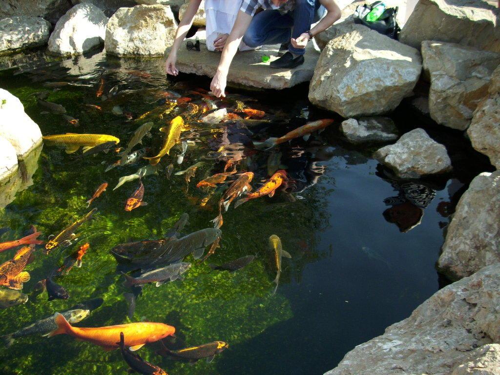 Bild aussenanlage koi teich zu palma aquarium in platja for Koi teich zugefroren