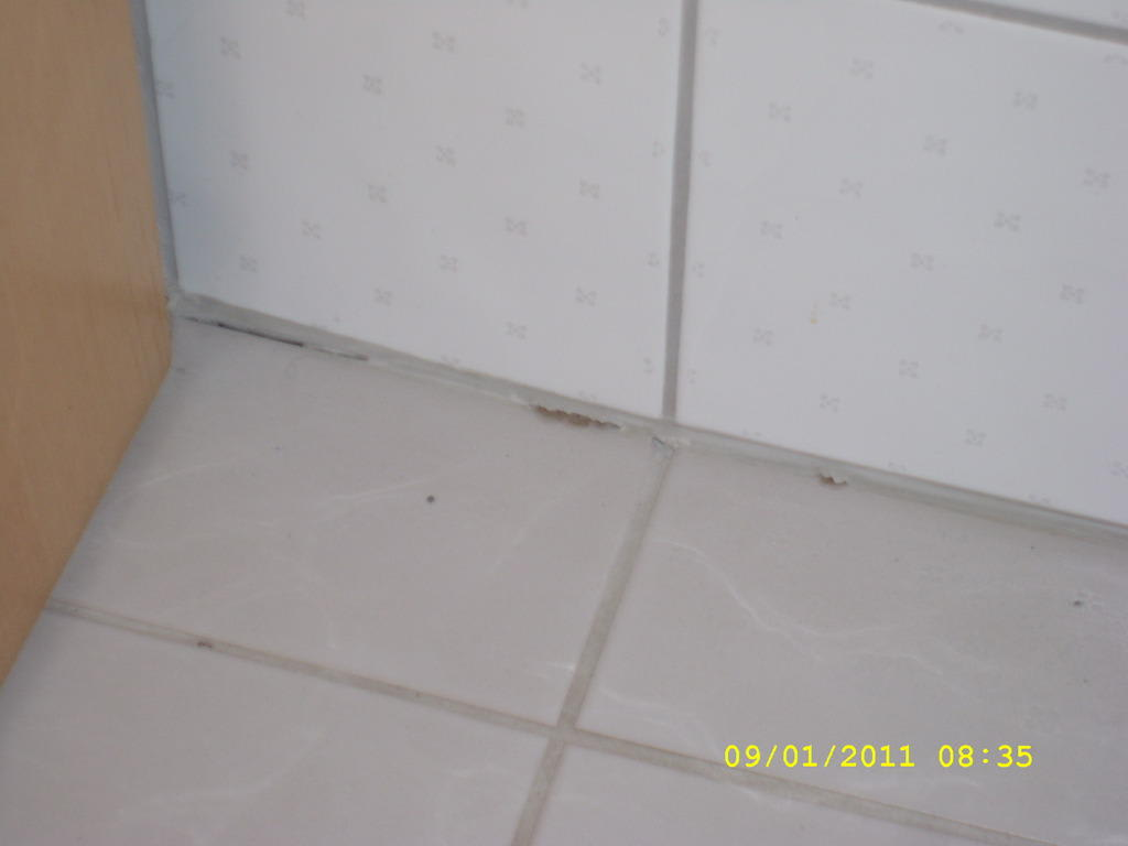 Bild Quot Wohnung Der Silberfische Quot Zu Apartmenthaus Edelweiss In St Gallenkirch