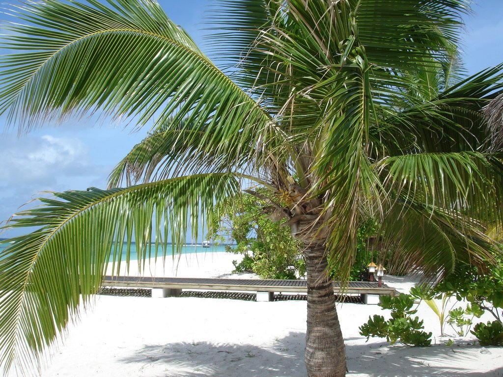 bild strand palmen zu palm beach resort spa maldives. Black Bedroom Furniture Sets. Home Design Ideas