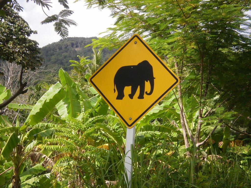 elefanten reiten phuket