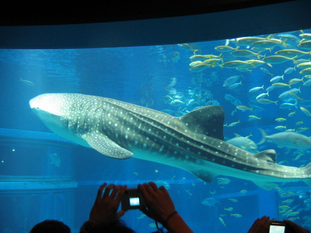 aquarium walhai